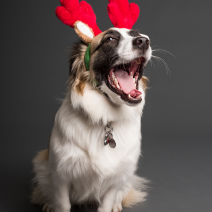 5 Tips to Help You & Your Pets Throughout the Silly Season