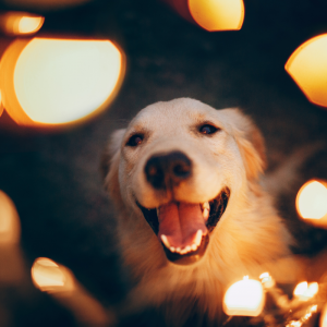 A Guide to Feeding Your Pet A Healthy Raw Food Diet in the New Year